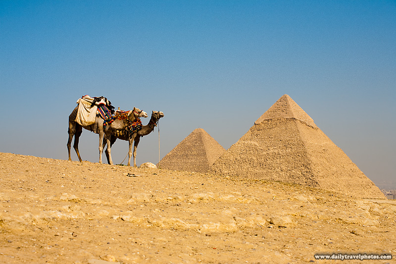 Camels Wait Tourists Pyramids - Cairo, Egypt - Daily Travel Photos